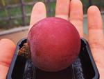 """Ai cũng sốc"""" khi nghe qua mức giá của 8 loại trái cây đắt nhất hành tinh này, bỏ ra hàng trăm triệu mới mua được là chuyện bình thường-9"""