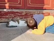 Nằm rạp xuống đường khi thấy chú mèo đang ngủ, cậu bé còn khiến ai nấy phải phì cười vì hành động sau đó