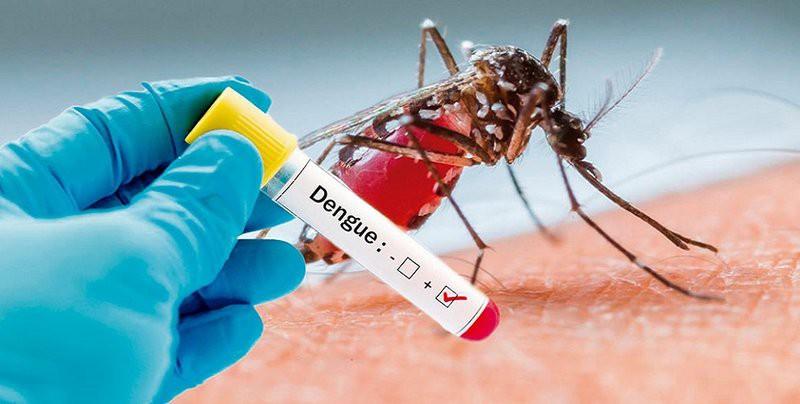 Việc cần làm để phòng bệnh sốt xuất huyết khi hàng nghìn ổ dịch bùng phát ở miền Nam, cả nước có 6 trường hợp tử vong-2