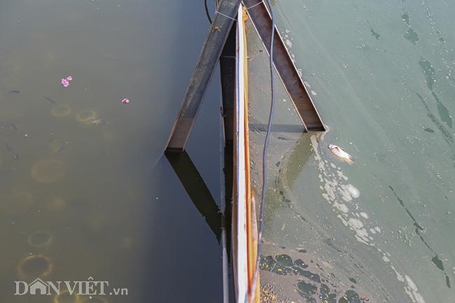 Nước hồ Tây chuyển màu trong vắt hé lộ nhiều điều bất ngờ dưới đáy-3
