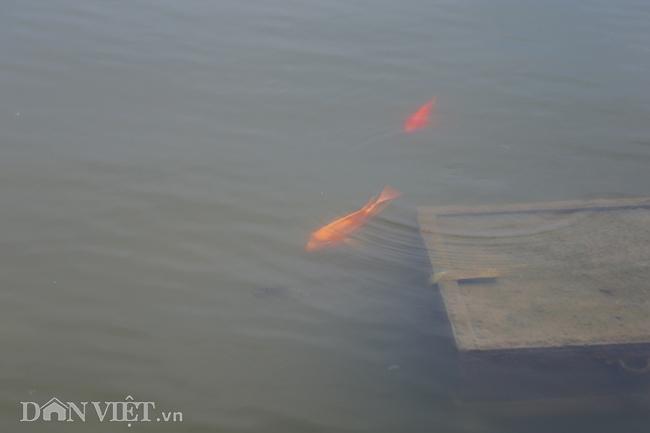 Nước hồ Tây chuyển màu trong vắt hé lộ nhiều điều bất ngờ dưới đáy-4