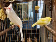 'Lóa mắt' với chim quý tộc giá tiền tỷ có 'bảo mẫu' chăm sóc, ở phòng điều hòa cả ngày