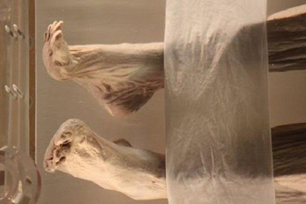 Câu chuyện bí ẩn về xác ướp vị phu nhân Trung Hoa kỳ lạ nhất thế giới: 2.000 năm tuổi da vẫn mềm, tóc vẫn xanh, có máu chảy trong tĩnh mạch-2