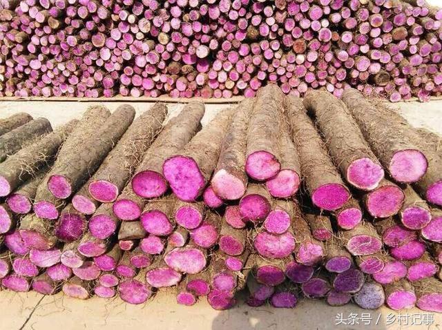 Nông dân trồng rễ cây biến sắc, bán gần 40 nghìn nửa cân-1