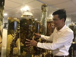 Đại gia Hà thành chi chục triệu thuê ô tô riêng chở một củ sâm quý