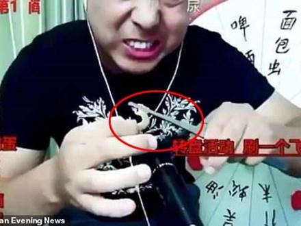 Livestream ăn tắc kè sống, rết độc, vlogger Trung Quốc mất mạng