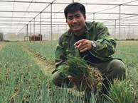 """Lãng tử 9X xứ Thanh bỏ lương """"khủng"""" về làng trồng...hành"""