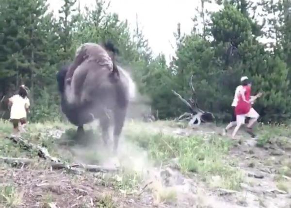 Clip gây sốc: Đi chơi công viên cùng gia đình, bé gái bị bò rừng tấn công, bố mẹ chỉ biết bỏ chạy thoát thân-1