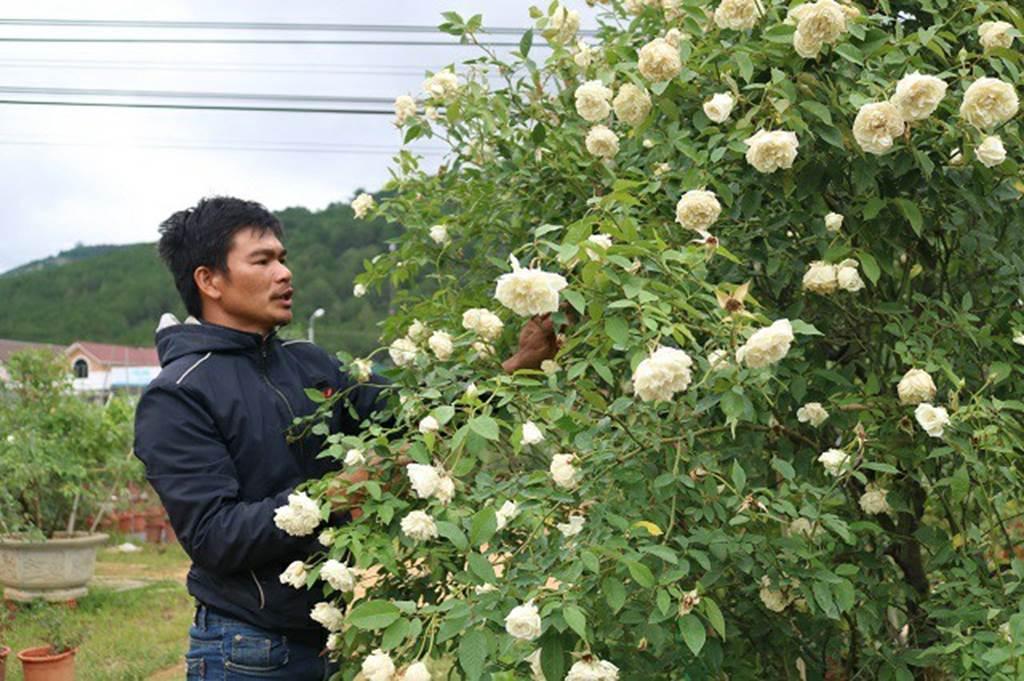 Chàng trai sở hữu vườn hoa hồng có chậu bán đến 150 triệu đồng-1