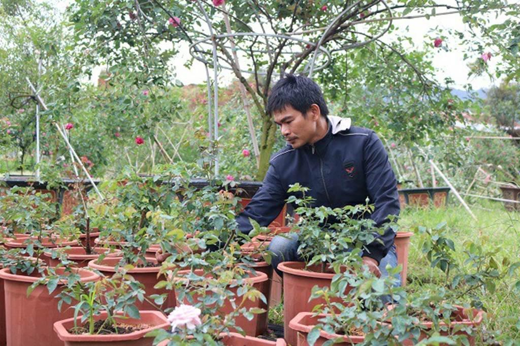 Chàng trai sở hữu vườn hoa hồng có chậu bán đến 150 triệu đồng-2
