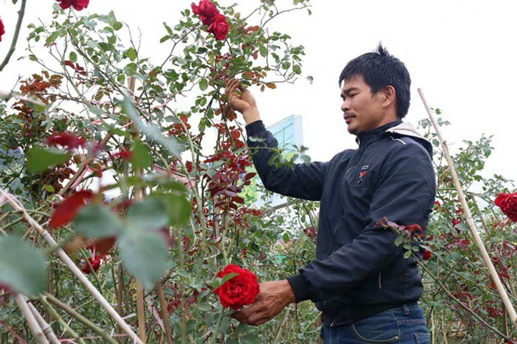 Chàng trai sở hữu vườn hoa hồng có chậu bán đến 150 triệu đồng-3