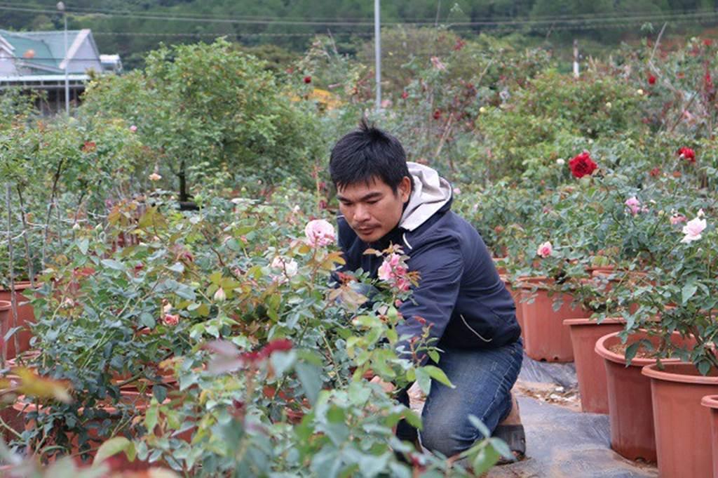 Chàng trai sở hữu vườn hoa hồng có chậu bán đến 150 triệu đồng-4