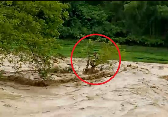 Đu ngọn cây, người đàn ông Thanh Hóa sống sót giữa dòng lũ cuồn cuộn-1