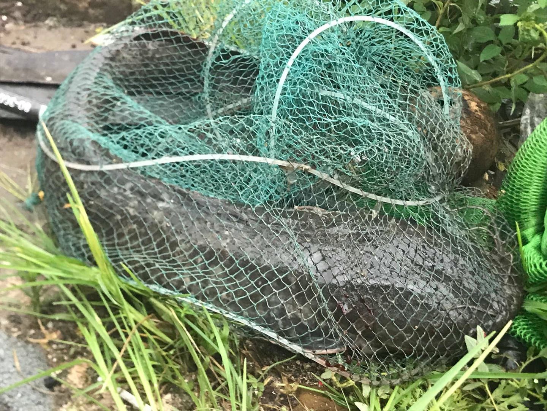 Hà Nội mưa như trút nước, người khốn khổ tát nước từ nhà ra sân, người hăng hái ra kênh bắt cá-15