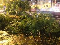 Mưa lớn khiến cây xanh tại Hà Nội đổ gục hàng loạt, dây điện chằng chịt trên vỉa hè