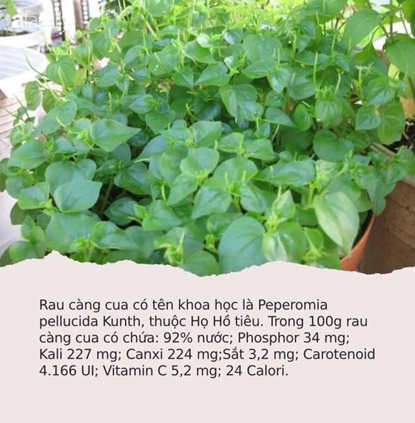 Có loại rau đắt hơn thịt, châu Âu, Trung Quốc tôn thảo dược quý chữa bệnh cực tốt, người Việt chỉ coi là cỏ dại-1