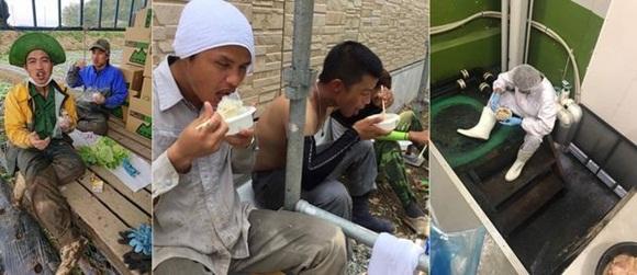 Đằng sau những tờ tiền người Việt ở Nhật gửi về quê: Bữa cơm toàn lạc với trứng, phơi thân giữa đường trong cái nóng 40 độ C-3