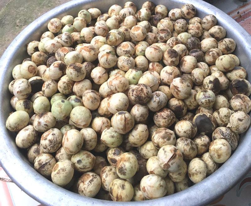 Quả rừng lạ về Hà Thành, đặc sản màu đen nấu bát canh mất 1 tiếng-4
