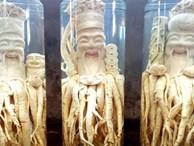 """Sự thật về loại """"nhân sâm của người nghèo"""", trị bách bệnh đang được người Việt săn đón nhiều nhất"""