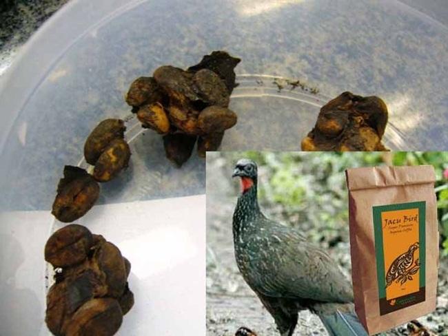 Thứ đắt hơn vàng trong phân chim, chăm đi nhặt về bán chục triệu dễ dàng-4