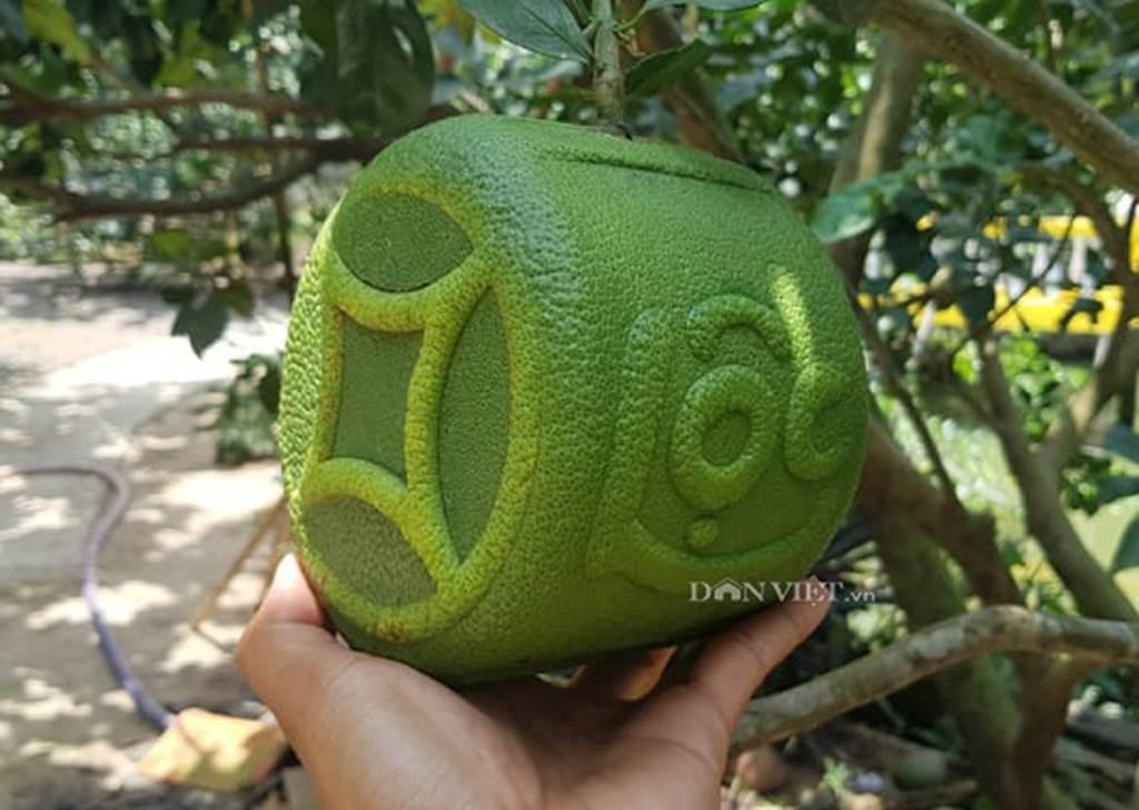 Độc lạ 200 trái bưởi hình dạng đồng tiền, có chữ Tài Lộc ở miền Tây-2