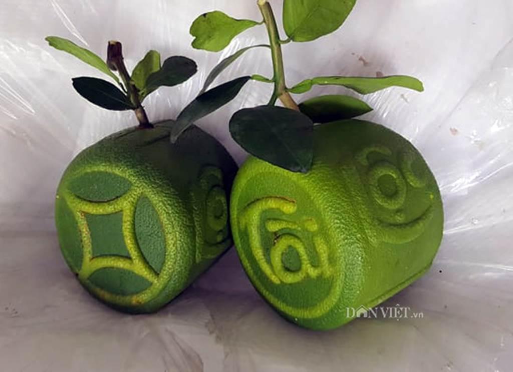 Độc lạ 200 trái bưởi hình dạng đồng tiền, có chữ Tài Lộc ở miền Tây-3