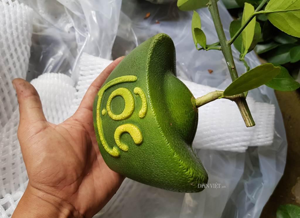 Độc lạ 200 trái bưởi hình dạng đồng tiền, có chữ Tài Lộc ở miền Tây-8