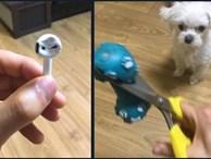 Tức giận chó cưng cắn nát AirPod, 'sen ngố' ra tay dằn mặt khiến 'boss' chỉ biết đứng hình 5 giây