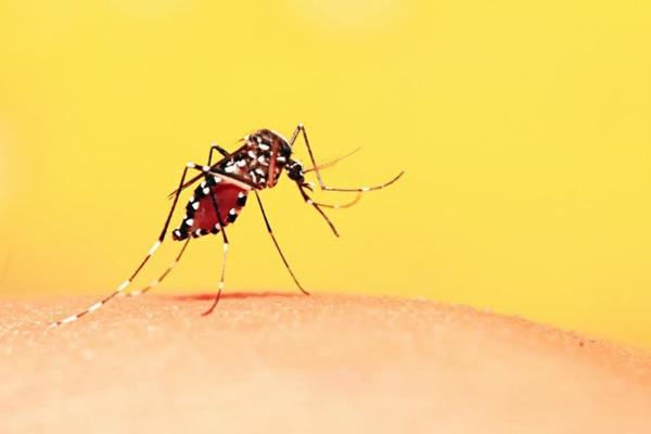 Triệu chứng dễ nhầm sốt xuất huyết và sốt thường, để lâu nguy hiểm tính mạng-1
