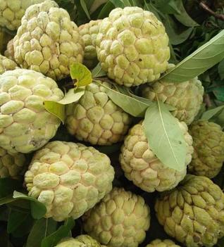 Điểm danh 10 loại na đang có mặt trên thị trường Việt, loại đắt nhất lên tới gần 500 nghìn/kg-4