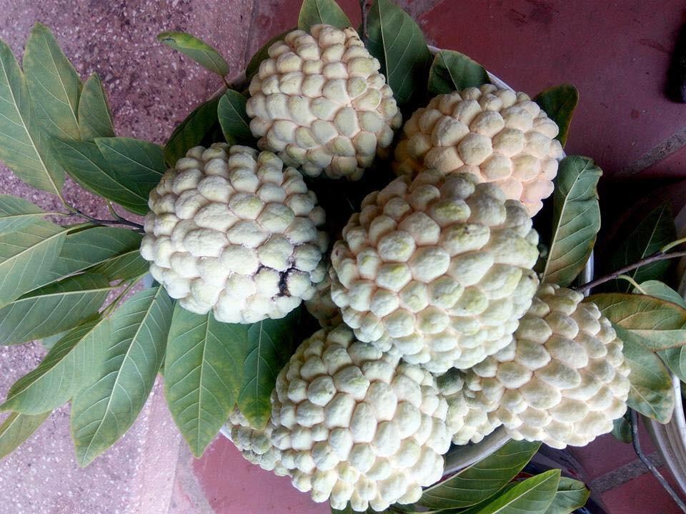 Điểm danh 10 loại na đang có mặt trên thị trường Việt, loại đắt nhất lên tới gần 500 nghìn/kg-7