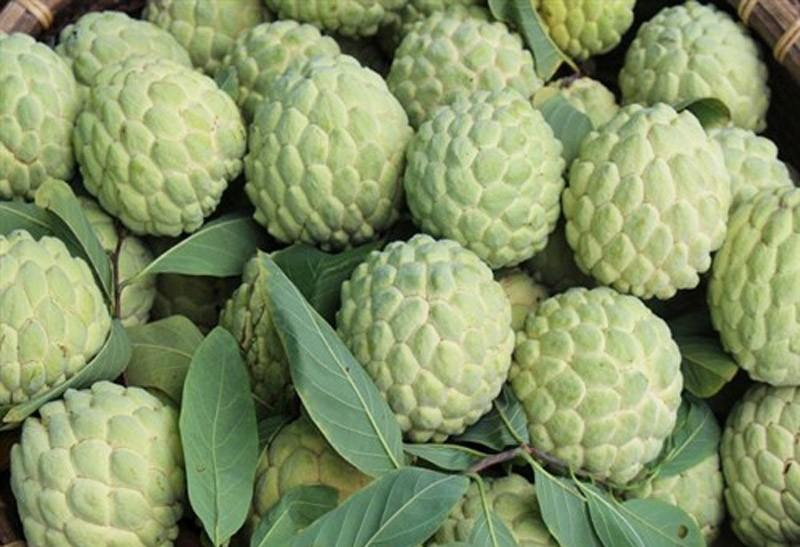 Điểm danh 10 loại na đang có mặt trên thị trường Việt, loại đắt nhất lên tới gần 500 nghìn/kg-8