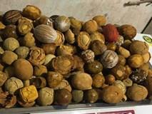 Sỏi mật trâu, bò đắt hơn vàng ròng, xếp hàng cả năm không có mà mua