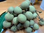 Nhãn bắp cải, hàng Việt cực hiếm, giá cực đắt có tiền khó mua-4