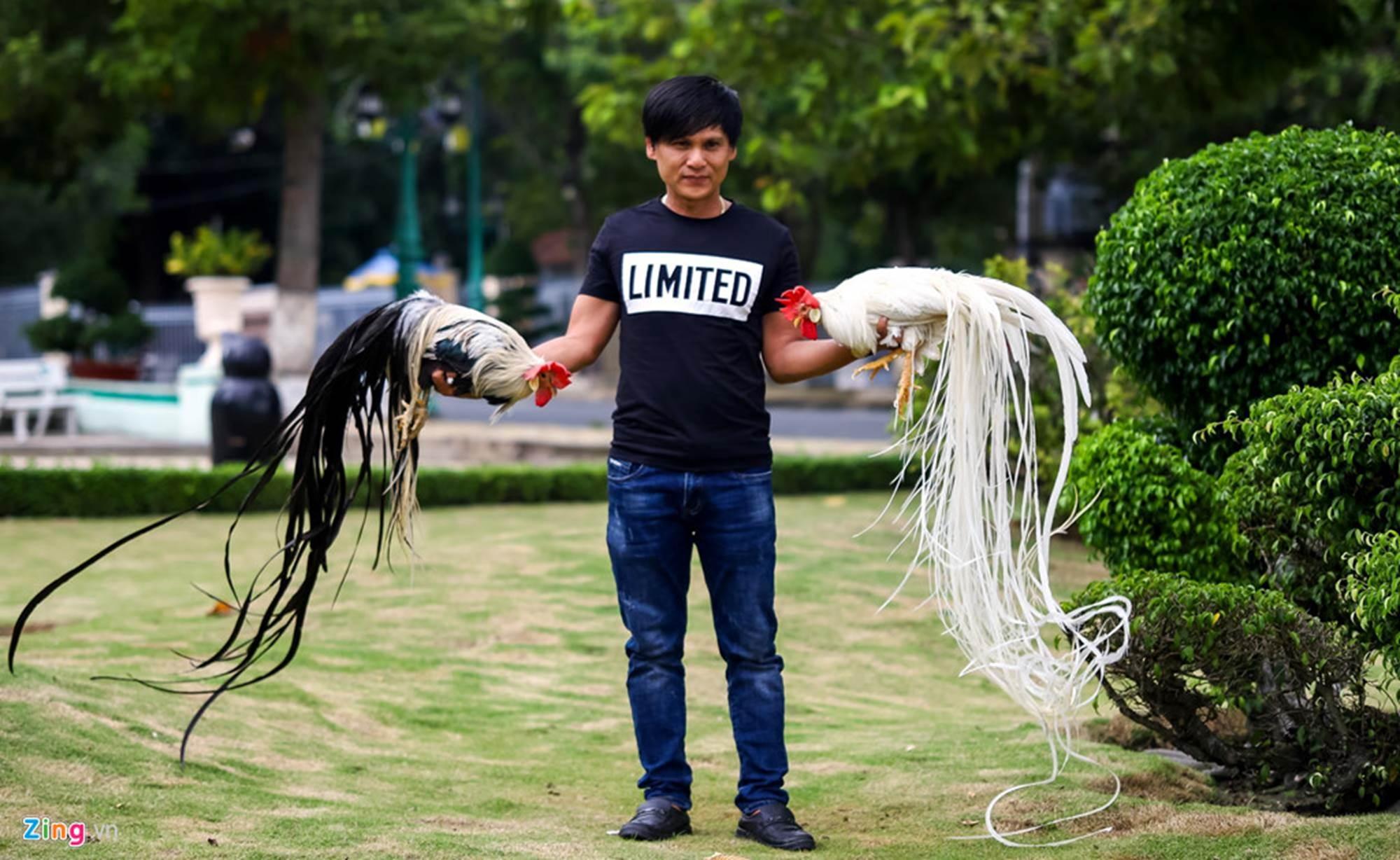 Bán gà đo đuôi tính tiền, giá trăm triệu mỗi con ở Tây Ninh-1