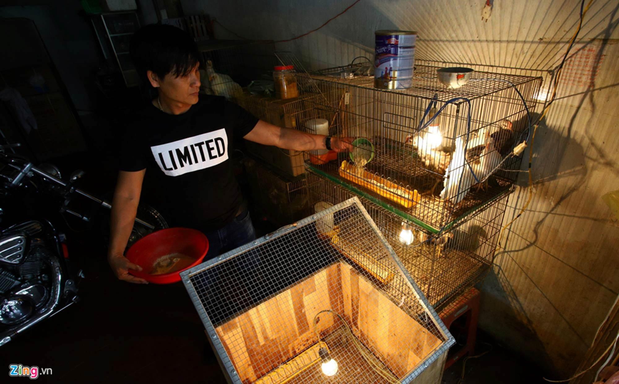 Bán gà đo đuôi tính tiền, giá trăm triệu mỗi con ở Tây Ninh-11