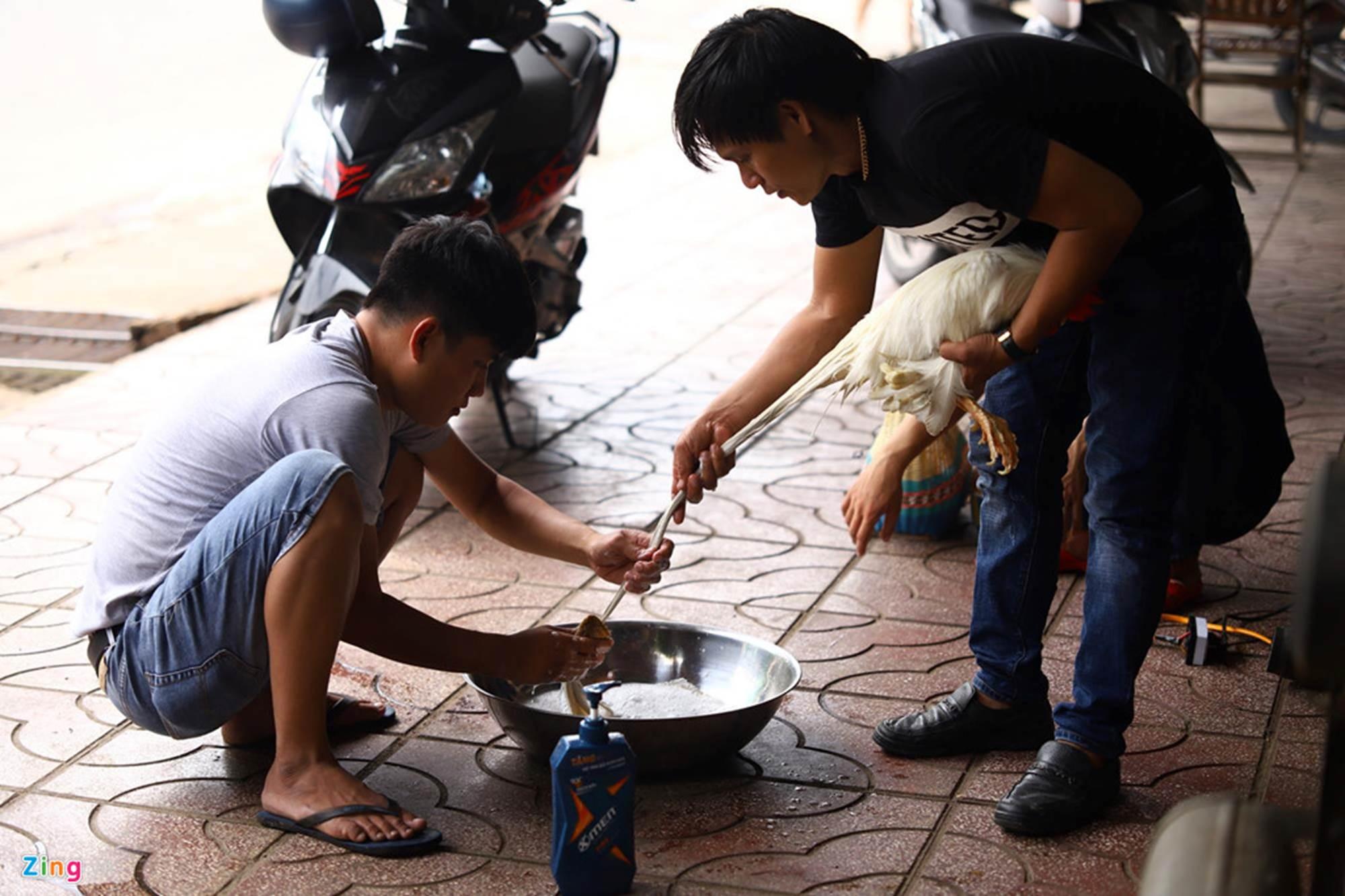 Bán gà đo đuôi tính tiền, giá trăm triệu mỗi con ở Tây Ninh-3