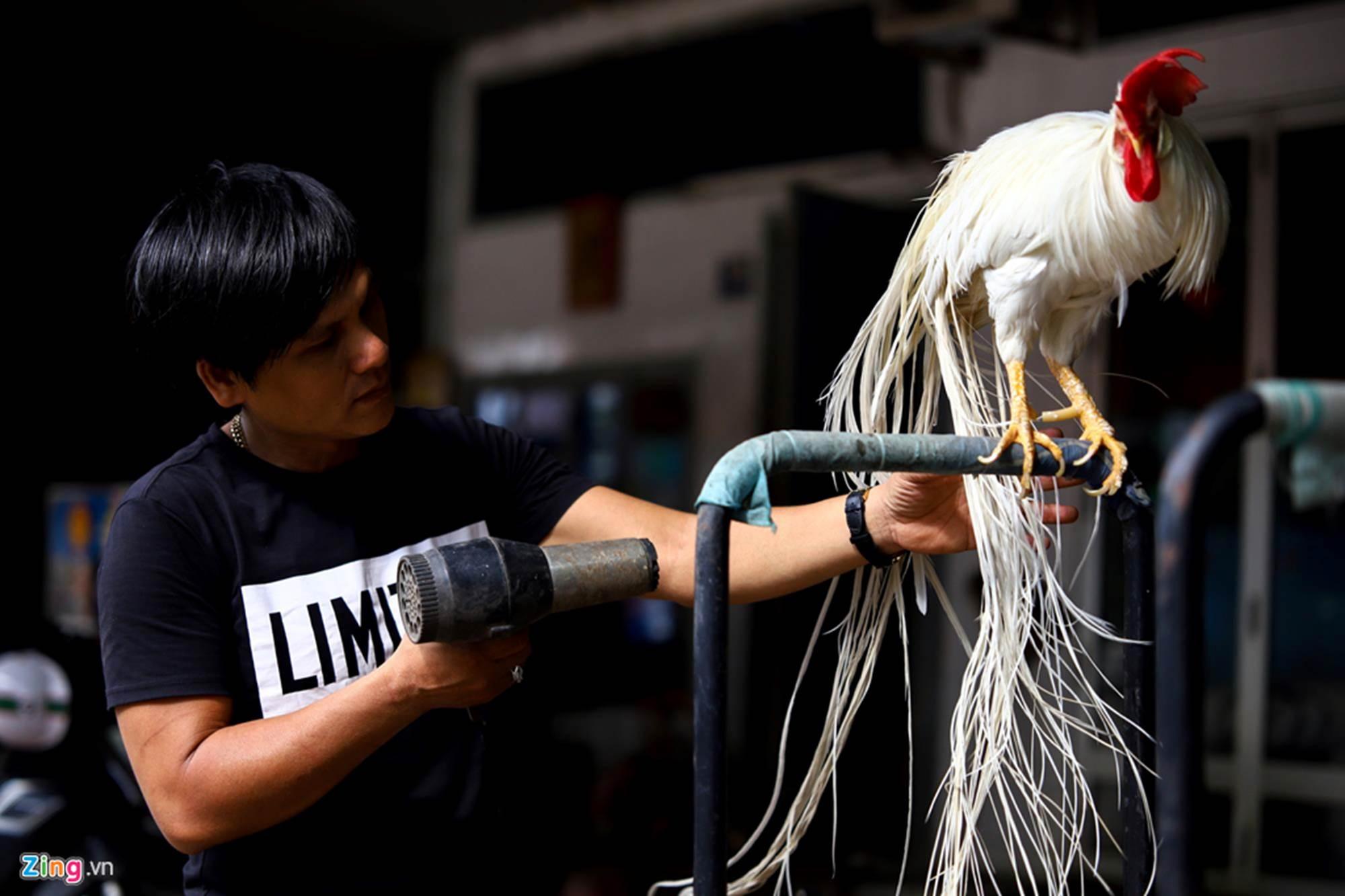 Bán gà đo đuôi tính tiền, giá trăm triệu mỗi con ở Tây Ninh-5