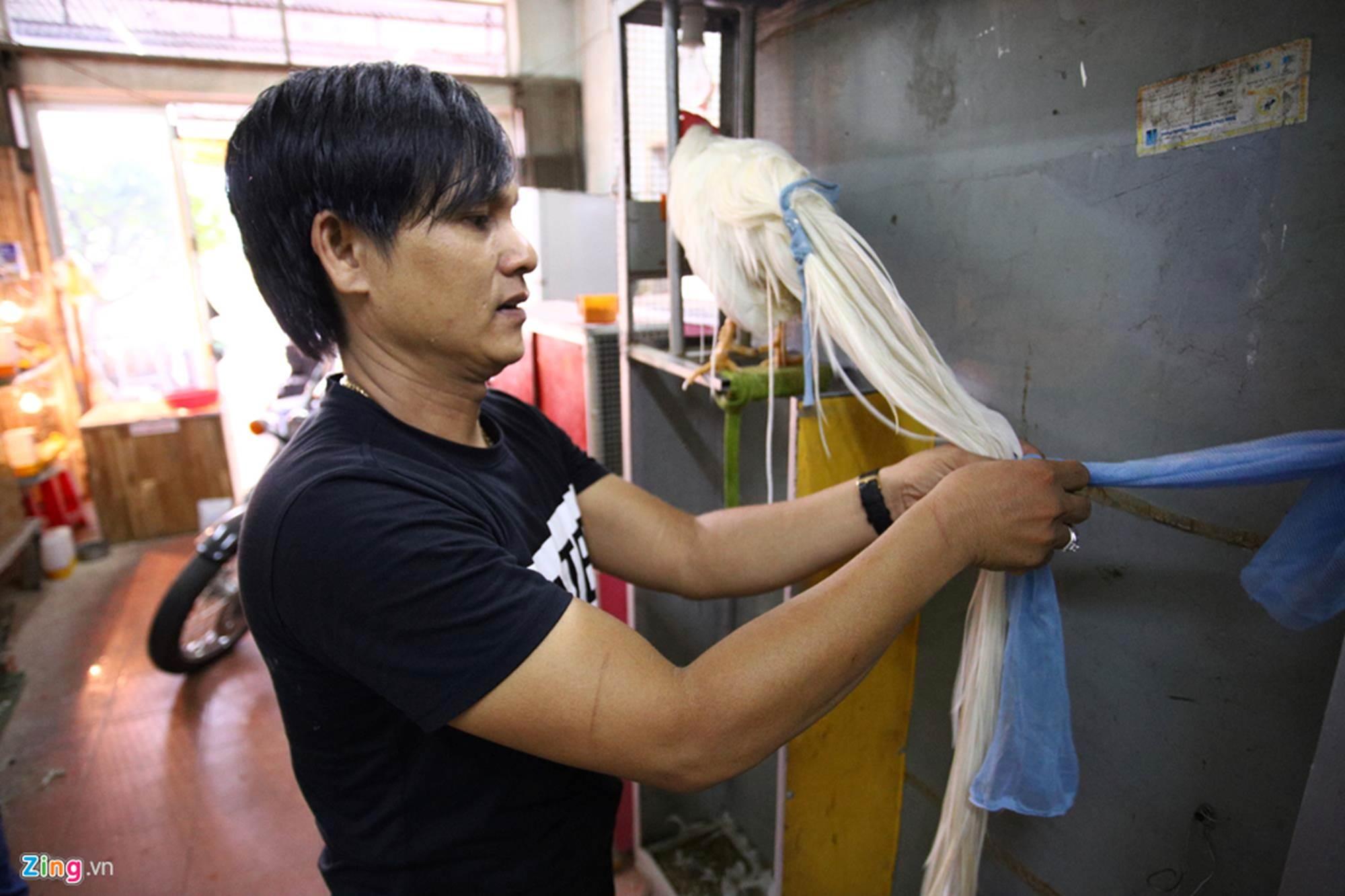 Bán gà đo đuôi tính tiền, giá trăm triệu mỗi con ở Tây Ninh-8