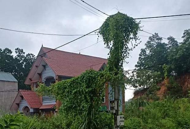 1 phút 9 lần mất điện, hàng trăm hộ dân ở Thanh Hóa bị cháy tivi, tủ lạnh-3