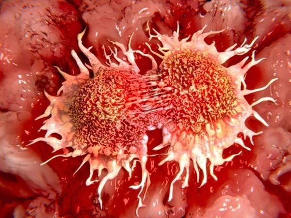 Thứ cho không ai lấy của quả bưởi thực ra chống được ung thư, giảm cân nhanh, trị bách bệnh-3