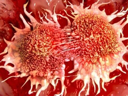 Thứ cho không ai lấy của quả bưởi thực ra chống được ung thư, giảm cân nhanh, trị bách bệnh