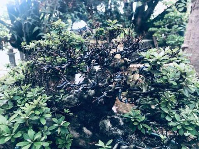 Thê thảm khu vườn nhà Trầm Bê, đại gia mất trắng chục tỷ-1