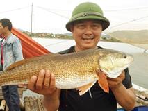 Câu được cá lạ 7kg nghi sủ vàng quý hiếm trên sông Gianh