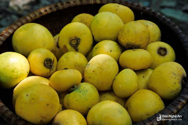 Cụ thị khủng 200 tuổi vẫn đẻ sòn sòn trái chín vàng, thơm nức-6