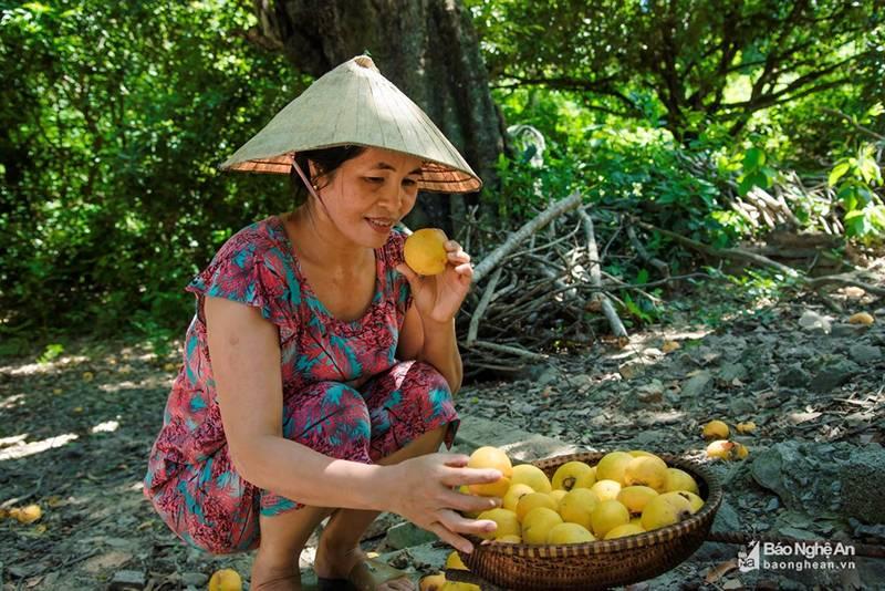 Cụ thị khủng 200 tuổi vẫn đẻ sòn sòn trái chín vàng, thơm nức-8