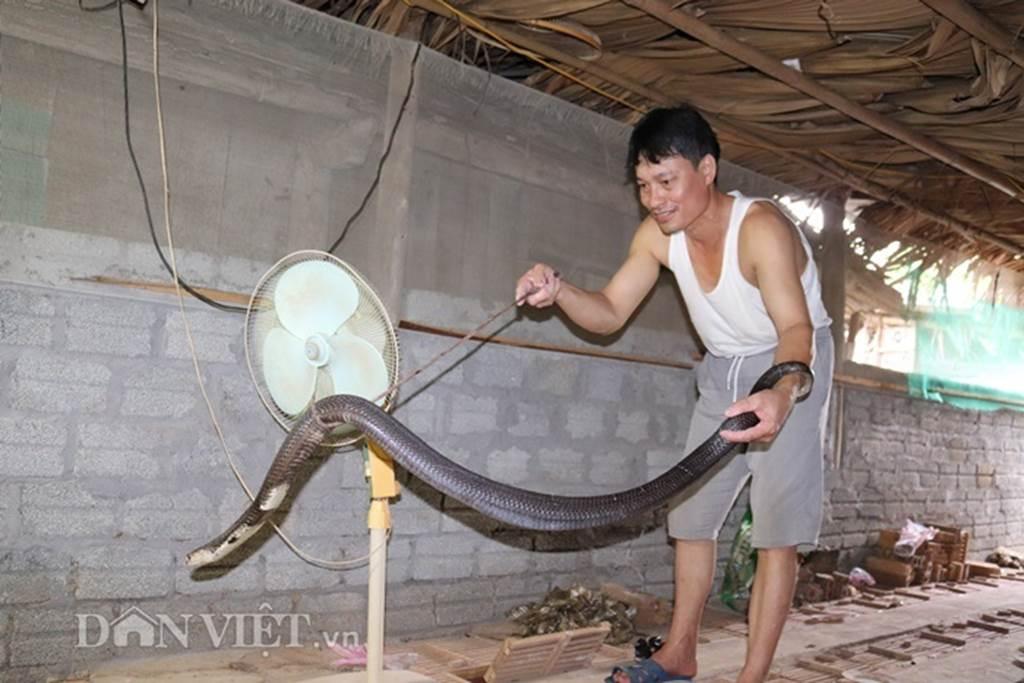Ớn lạnh người đàn ông nuôi 1.000 con mãng xà cực độc ở Lào Cai-5
