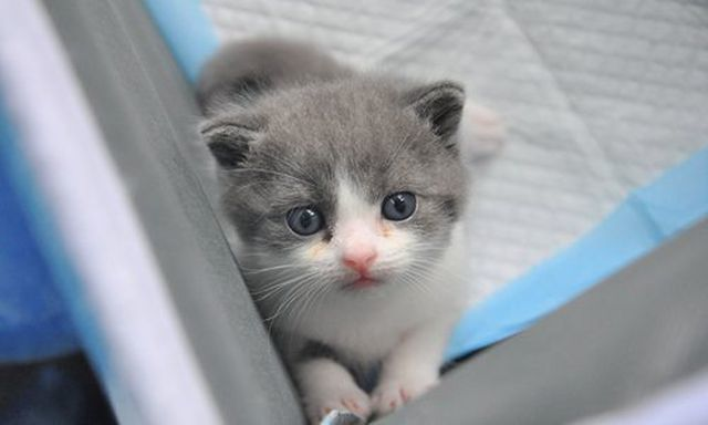 Hơn 800 triệu cho một con mèo nhân bản tại Trung Quốc-2