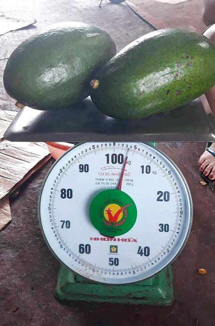 Bơ Đài Loan siêu to khổng lồ 1 quả nặng 1kg giá 400 nghìn đồng vẫn cháy hàng-7