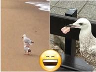 Bật cười trước những khoảnh khắc ngẫu hứng đầy thú vị của loài chim